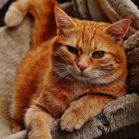 Mixed Breed Cat Breed Info